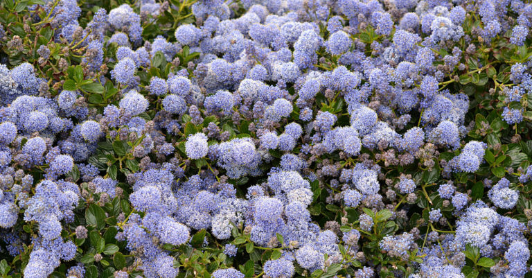 Hoovers Farm Perennial Flowers