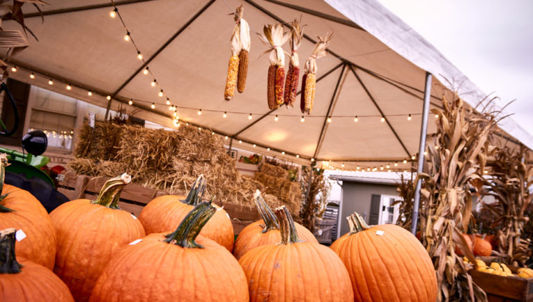 Pumpkins and Fall Decorations at Hoovers Farm